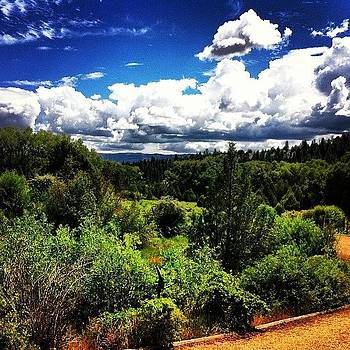 #utah #trees #forest #clouds by Julia Goldberg