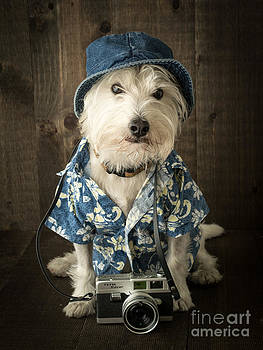 Edward Fielding - Vacation Dog