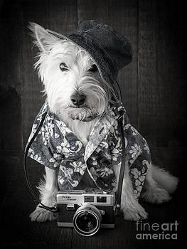 Edward Fielding - Vacation Dog with camera and Hawaiian shirt