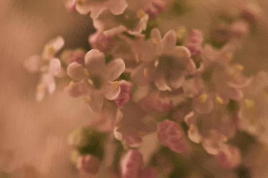 Sandra Foster - Valarian Blossoms Macro - Digital Oil Painting