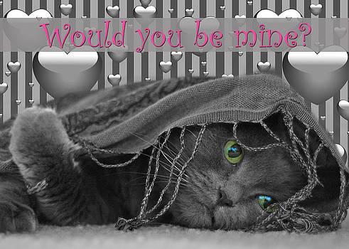 Joann Vitali - Valentine Day Cat