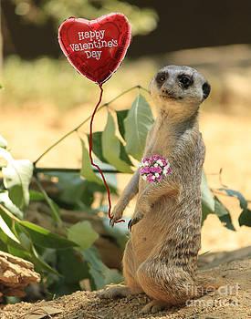 Valentine Meerkat 2 by Lawrence Costales