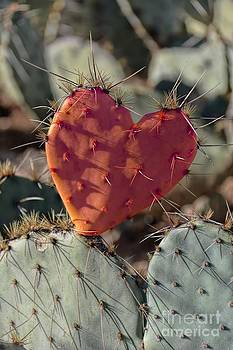 Valentine Prickly Pear Cactus by Henry Kowalski