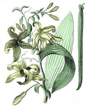 Sheila Terry - Vanilla