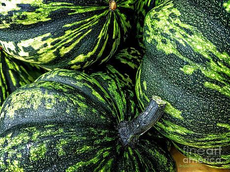 Dee Flouton - Variegated Green Acorn Squash