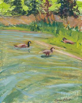 Vasona Lake Geese by Suzanne Elliott