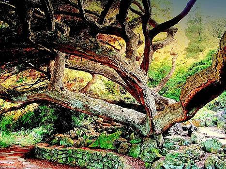 Rick Todaro - Vecchio Albero  Magnifico / The Magnificent Old Tree