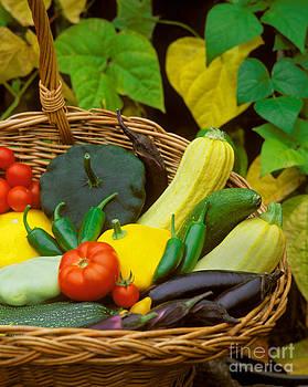 Craig Lovell - Vegetable Harvest