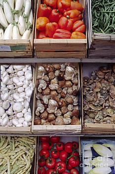 Craig Lovell - Vegetables and Fungi Gordes France