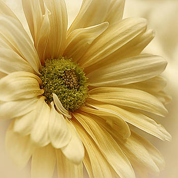 Veil of the Sun by Darlene Kwiatkowski