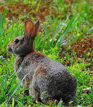 Velvet Rabbit by Leah Reynolds