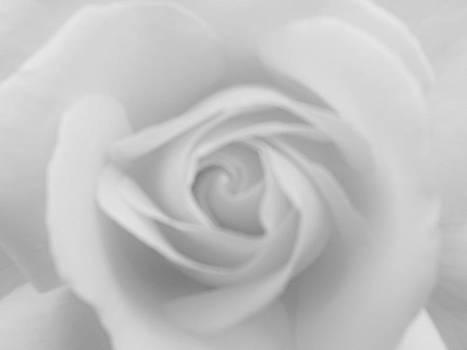 Charles Lucas - Velvet Rose