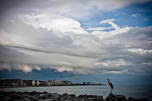 Venice Beach sand crane  by Gerald Adams