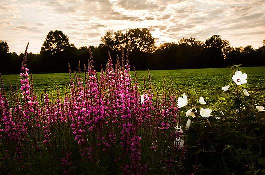 Randall Branham - Veronica and Hibiscus at Dawn