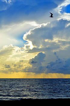 Vertical Horizon by Laura Fasulo