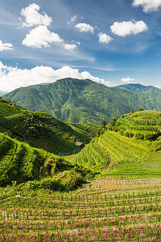 Vertical landscape photo of rice terraces in china by Juhani Viitanen