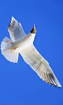 Kantilal Patel - Vertical Takeoff