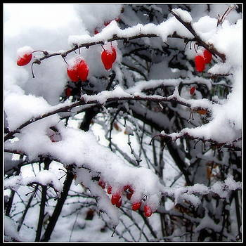 Very berry snow by Sherrie Robins