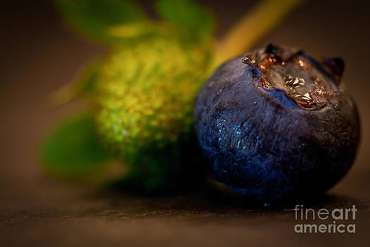 Very Blueberry by Patricia Bainter