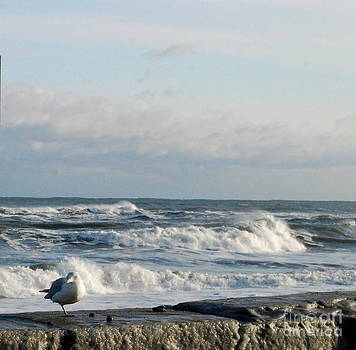 Seagull In Winter by Eunice Miller