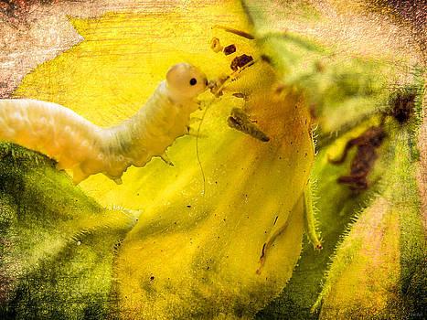 Very Hungry Caterpillar by Yvon van der Wijk