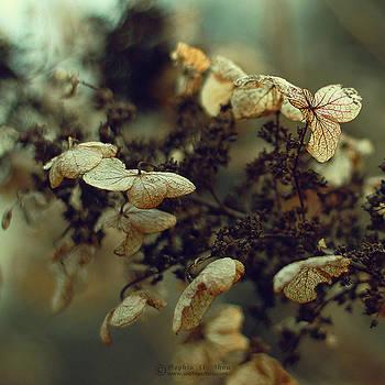 Vespers by Sophia Adalaine Zhou