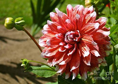 Danielle Groenen - Vibrant Blooming