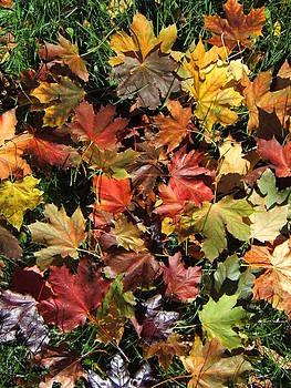 Vibrant Days of Autumn by Margaret McDermott