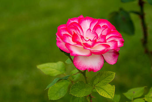 Vibrant Flower by Michael Hunter