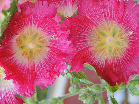 Vibrant Hollyhocks by Peg Toliver