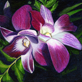 Vibrant Pink Orchid by Sandi Howell