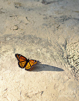 Viceroy Butterfly by Mary Licanin