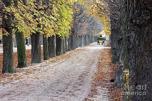 Vienna Cart Path by Jim Gillen