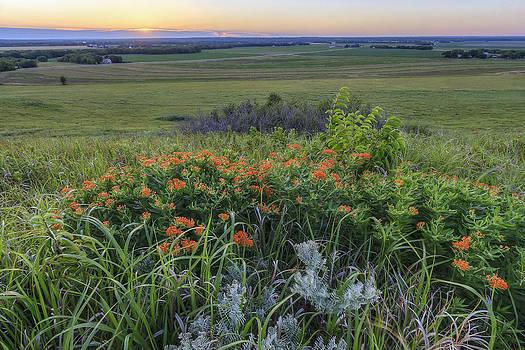 Scott Bean - View from Mount Mitchell