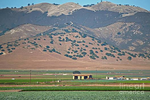 Susan Wiedmann - View from the Crops