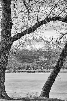 James BO  Insogna - View Through The Trees To Longs Peak BW