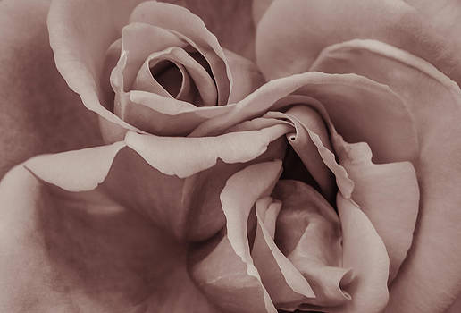 Vignette rose. by Slavica Koceva