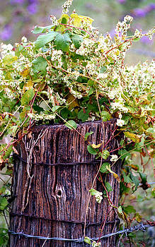 Vine-covered Fence Post by Roger Soule