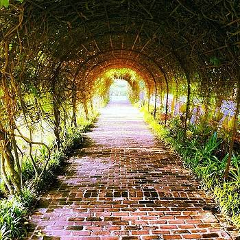 Vine Tunnel by Nathan Jordan