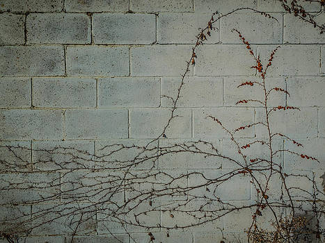 Vines by Carl Engman
