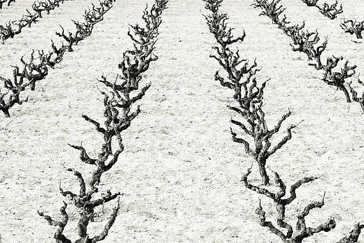 Frank Tschakert - Vines