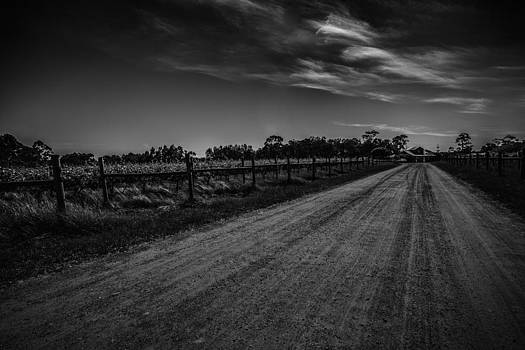 Vines Line The Path by Shari Mattox