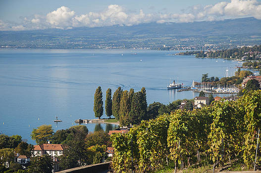 Vines over Lake Geneva by Rob Hemphill