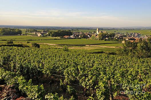 BERNARD JAUBERT - Vineyard and village of Pommard. Cote d