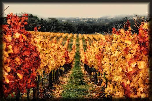 Vineyard Autumn by John Monteath