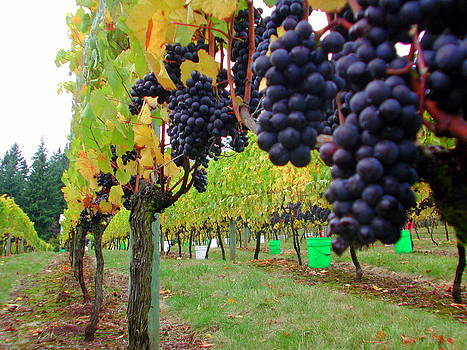 Vineyard Grapes by Mamie Gunning