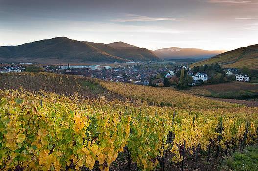 Vineyard in Alsace by Eric Bauer
