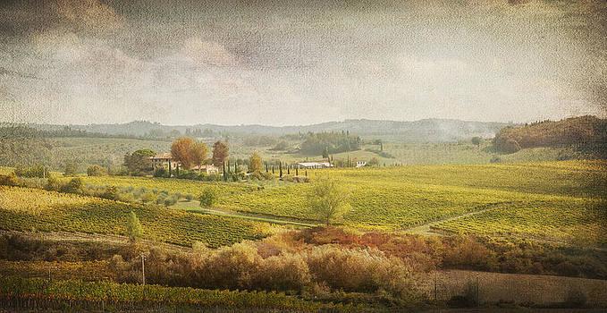 Vineyard in Chianti - Tuscany by Toma Bonciu