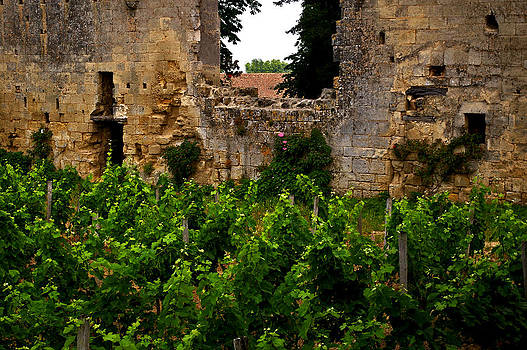 Vineyard In The Ruins by Christine Burdine