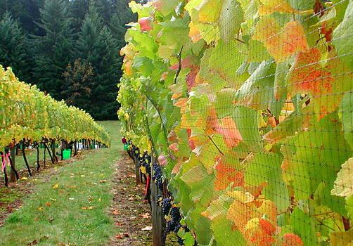 Vineyard by Mamie Gunning